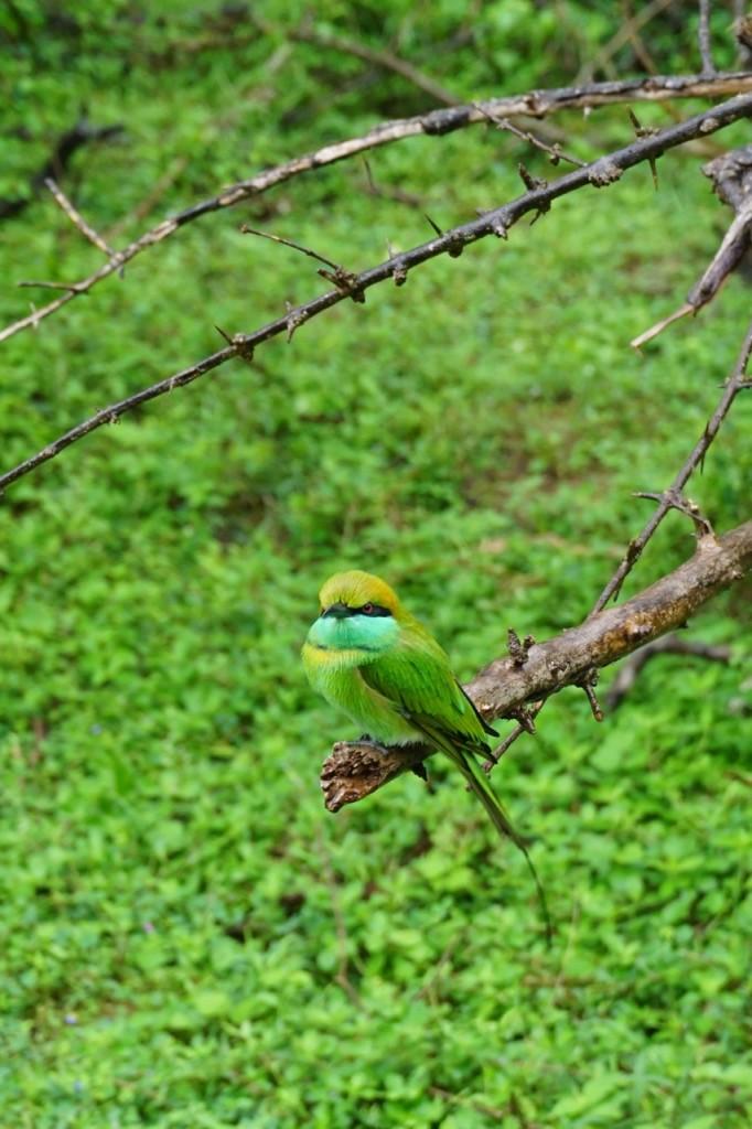 yala-bird